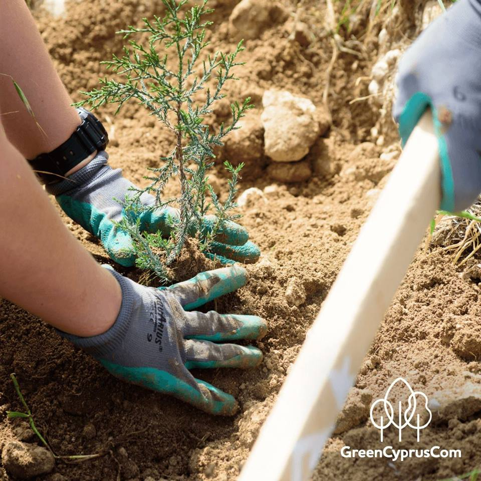 Fourth Major Tree Planting