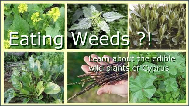 The Edible Plants of Cyprus - hosted by CIWOT