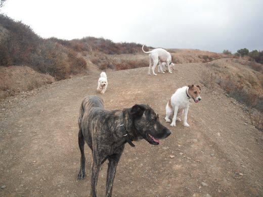 Dog walking Club