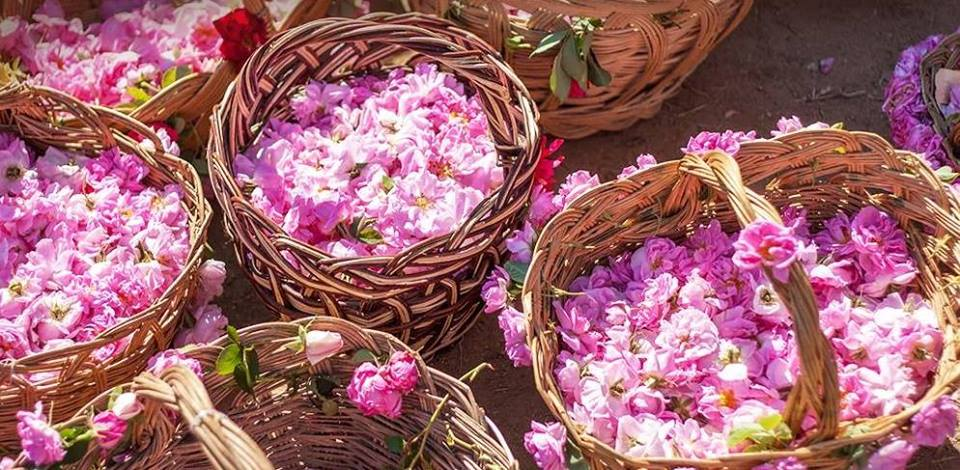Εκδρομή στον Αγρό (φεστιβάλ Τριαντάφυλλου)