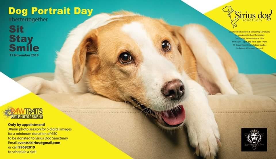 Sit, Stay, Smile - Dog portrait Day